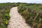 Sand footpath through dunes — Stock Photo