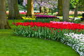 Holland spring flower park — Stock Photo