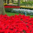 Bright flowerbed in Keukenhof — Stock Photo #14167130