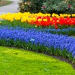 Bright flowerbed in Keukenhof — Stock Photo