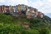 Corniglia, cinque terre, italië — Stockfoto