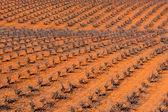 Spanish Vineyard — Stock Photo