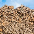 Royalty-Free Stock Photo: Pile of wood