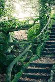 Sunbeam briller à travers la forêt verte — Photo