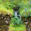 Window of Overgrown Icelandic House — Stock Photo