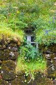 Fenêtre de maison islandaise envahi — Photo