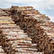 Big pile of logs — Foto Stock