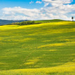 Outdoor Tuscan Val d'Orcia green and yellow hills — Stock Photo
