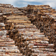 Big pile of logs — Stock Photo