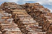 Grote stapel van logboeken — Stockfoto
