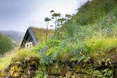 Fleurs sauvages sur envahis vieille clôture pierre en islande — Photo