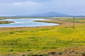 Lake in Pingvellir national park, Iceland — Stock Photo