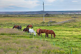 Horses in a green field of grass at Iceland Rural landscape — Stock Photo