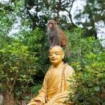 Little monkey is sitting on Buddha statue head — Stock Photo #23813859