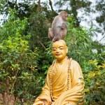 Little monkey sitting on Buddha statue head — Stock Photo #23814595