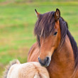 Brown Horse and Her Foal in a Green Field of Grass — Stock Photo #24325173