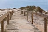 Wooden footpath through dunes at the ocean beach — Stock Photo