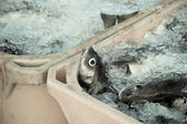 Catch of the day - Fresh Fish in Shipping Containers — Stock fotografie