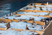 Catch of the day - Fresh Fish in Shipping Containers — Stock Photo