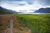 Green Cereal Field at Eastern Iceland — Stock Photo
