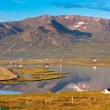 North Iceland Sea Lagoon Landscape — ストック写真