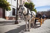 Trasporto cavallo per turisti a sevilla, spagna — Foto Stock