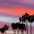 Palm Tree Silhouettes on Sunset Sky Background — Stock Photo #37701159