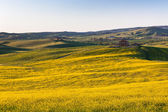 Tuscan Val d Orcia green and yellow fields view — Stock Photo