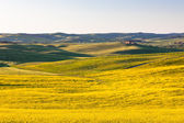 Outdoor Tuscan Val d Orcia green and yellow fields — Stock Photo