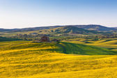 Outdoor Tuscan Val d Orcia green and yellow fields view — Stock Photo