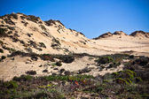 Dunes at the Ocean Beach in Portugal — Stock Photo