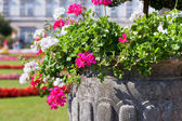 Bright heranium flowers in ancient stone pot  — Stock Photo