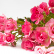Pink roses — Stock Photo #13472935