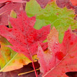 Royalty-Free Stock Photo: Colorful background of fallen autumn leaves