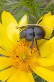 Bug on the wood — Stock Photo