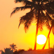 Palms and sun, tropical sunset taken in Goa, India — Stock Photo #21627601