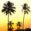 Palms and sun, tropical sunset taken in Goa, India — Stock Photo #21627695