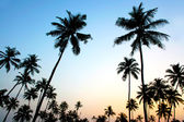 Palms and sun, tropical sunset taken in Goa, India — Photo