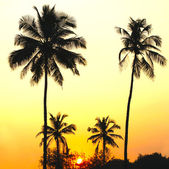 Palms and sun, tropical sunset taken in Goa, India — Stockfoto