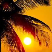 Tropical sunset, palm trees and big sun — Stock Photo