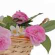 Pink roses and jasmine in a basket — Stock Photo