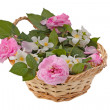 Pink roses in a basket — Stock Photo