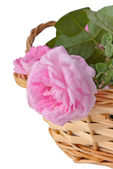 Pink roses in a basket — Stock fotografie