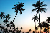 Tropical sunset taken in Goa — Stock Photo