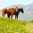 Black and red horses in mountains taken in Crimea, Ukraine — Stock Photo #25519743