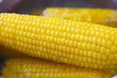 Fresh corn cobs — Stock Photo