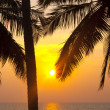 Tropical palms and sunset — Stock Photo
