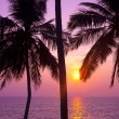 Tropical palms and sunset — Stock Photo #36468035