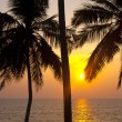 Tropical palms and sunset — Stock Photo #36468037