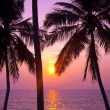Tropical palms and sunset — Stock Photo #36468065